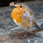 Robin Red Breast by Hayley Musson