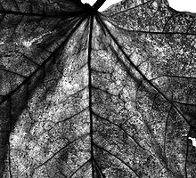 Leaf by DavidWedge