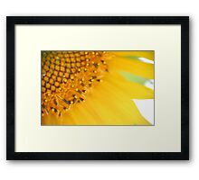 Sunflower, Southern France Framed Print