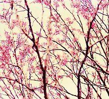 blossom wonderland by beverlylefevre