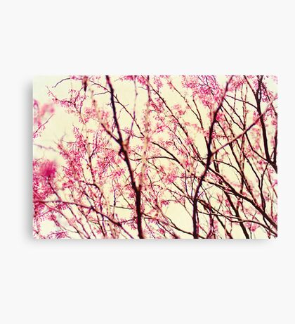 blossom wonderland Canvas Print
