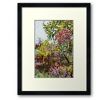 Spring garden Framed Print