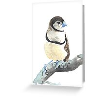 Double Barred Finch Greeting Card
