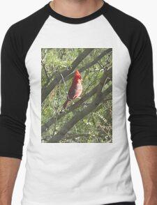 Northern Cardinal in a Tree Men's Baseball ¾ T-Shirt