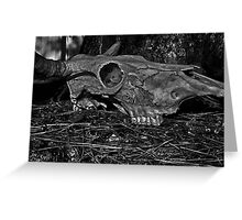 Animal Skull Greeting Card