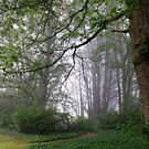 Misty Morning by Geoff Smith