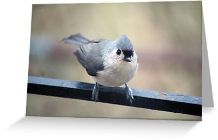 Curious Titmouse by WalnutHill