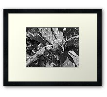 ©MS Lunchtime IA Monochrome Framed Print