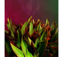 Succulents in red Photographic Print