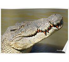 Big Crocodile Profile Photo 2 Poster