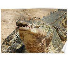 Saltwater Crocodile Crazy 1 Poster