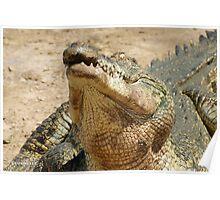 Saltwater Crocodile Crazy 2 Poster
