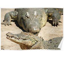 Saltwater Crocodile Crazy 6 Poster