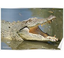 Saltwater Crocodile with mouth open Poster