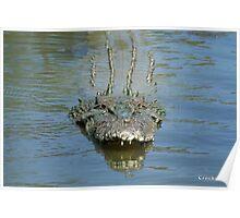 Saltwater Crocodile Lurking Poster