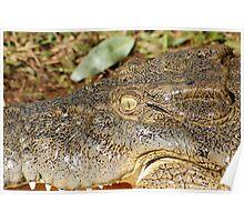 Saltwater Crocodile Wild Eye Poster