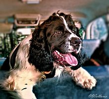 Back Seat Driver by wallarooimages