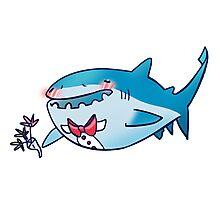 Prom Shark B Photographic Print