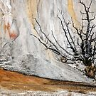 Mammoth Hot Springs by Eivor Kuchta