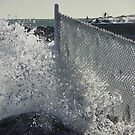 Frozen  Fence by irmajxxx