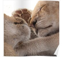 Lion cub siesta Poster