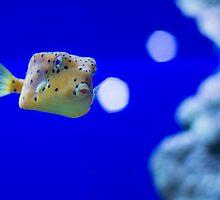 Boxfish II by pratt1ak
