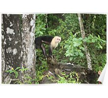 Manuel Antonio National Park Costa Rica Poster