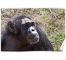 """""""Tarzan?  I Don't Know Anyone Named Tarzan!"""" Poster"""