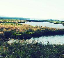 Wetlands in Padilla by galaxyosirissnc