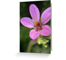 Tiny Flower  Greeting Card