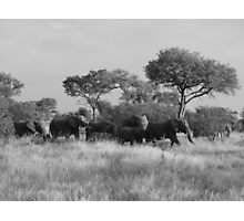 elephant crossing  Photographic Print