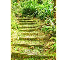 """Manoa Path"" by Carter L. Shepard Photographic Print"