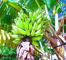 """Hawaii Bannana Tree"" by Carter L. Shepard by echoesofheaven"