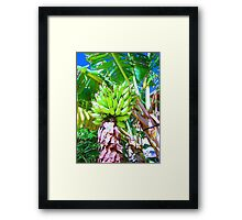 """Hawaii Bannana Tree"" by Carter L. Shepard Framed Print"