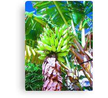 """Hawaii Bannana Tree"" by Carter L. Shepard Canvas Print"