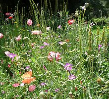 Wild Flowers in the Churchyard by Circe Lucas