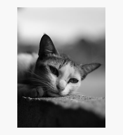 Lonely Kitten Photographic Print