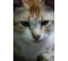 Pet cat garfield Photographic Print
