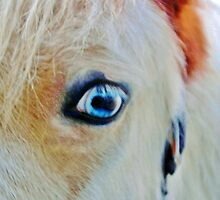 Blue-Eye Horse by Cynthia48