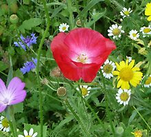 Wild Mixed Flowers by Circe Lucas
