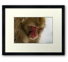 Snow Monkey close up Framed Print