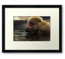 Snow Monkey bathing Framed Print