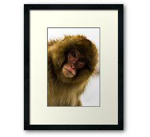 Snow Monkey face Framed Print