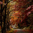 Road Of Joy ~ Fall Colors ~ by Charles & Patricia   Harkins ~ Picture Oregon
