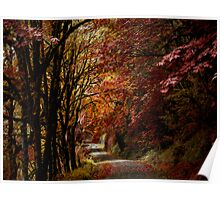 Road Of Joy ~ Fall Colors ~ Poster