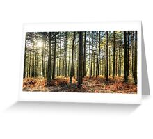 Sunlit Trees on the Ashdown Forest Greeting Card