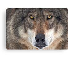 ... yes...I am a wolf-addict...  Canvas Print
