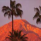 Sunset Light by Chet  King