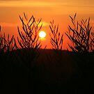 Sunset by Segalili