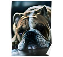 All I want for Christmas is a Bulldog Poster